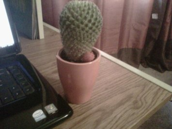Herman-The-Cactus